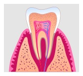 Fort Worth Root Canal Dentist Dr Sheri Audu